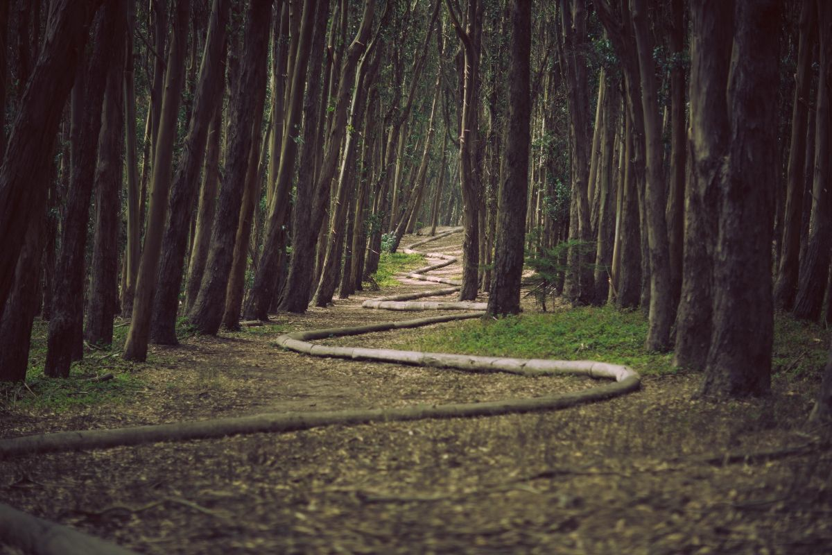 unsplash: path in woods